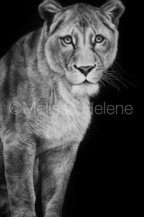 "African Lioness | Original | 20""x10"""