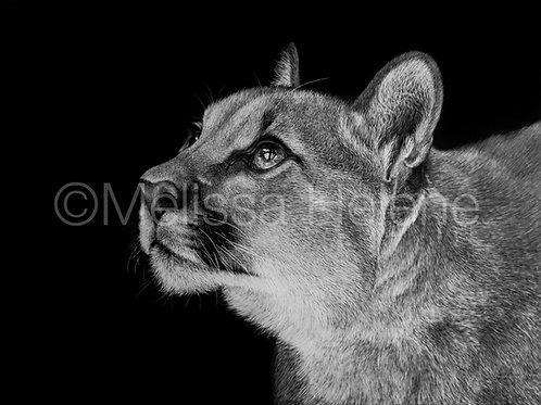 Puma 02 | Reproduction