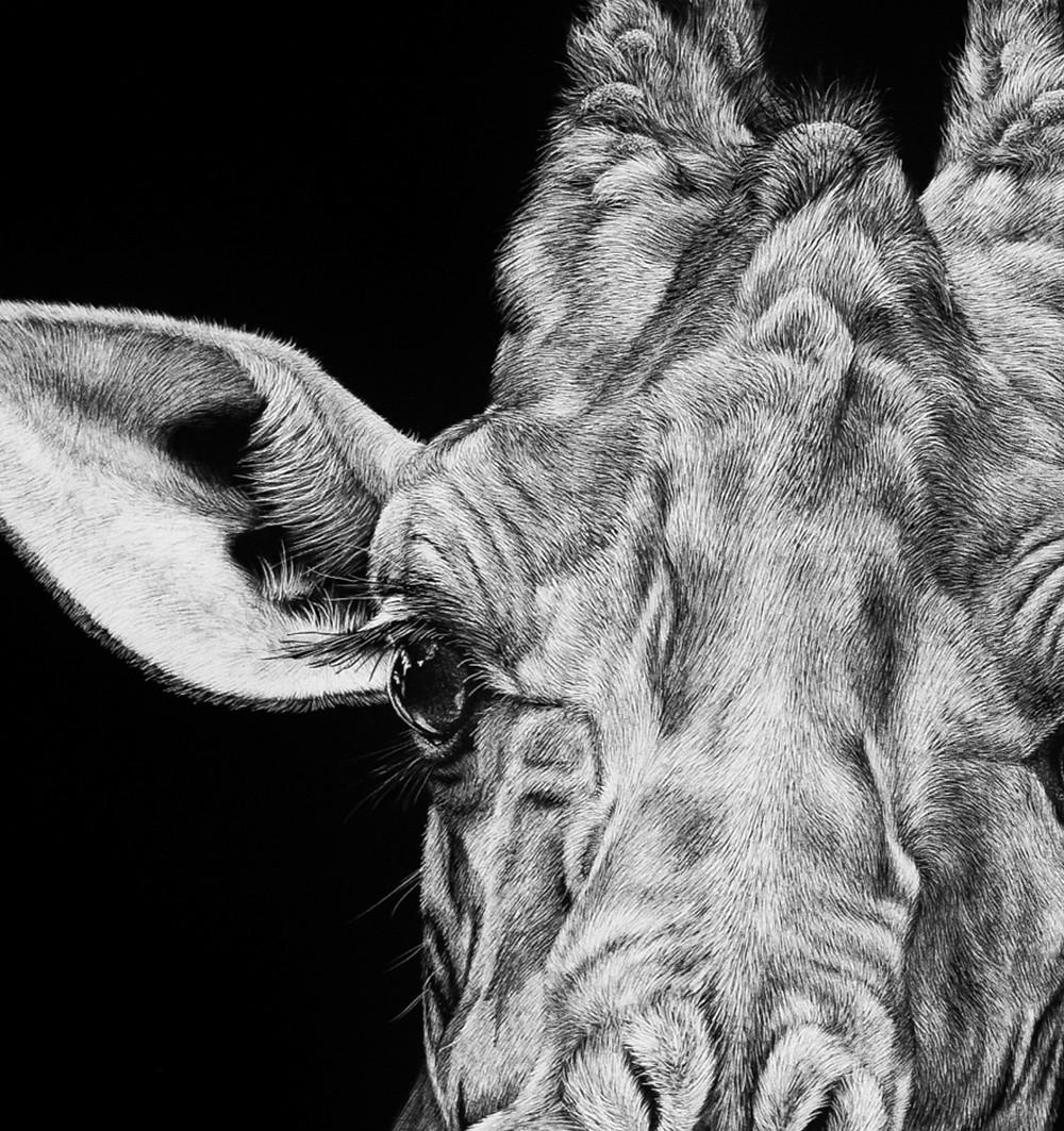 giraffe scratchboard by Melissa Helene Fine Arts