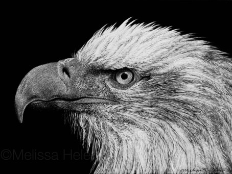 Bald Eagle | Endangered Species Series | A Success Story