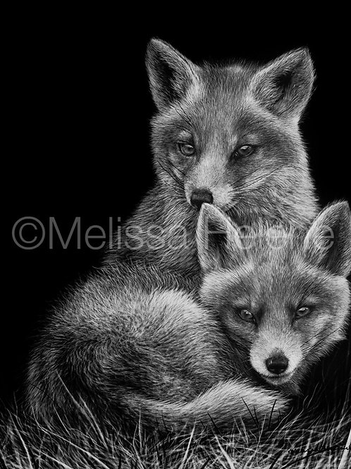 Baby Red Foxes | Reproduction