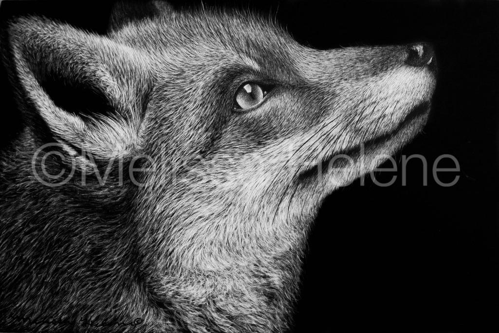 Fox 5 (wm)