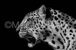 Jaguar 3 (wm)