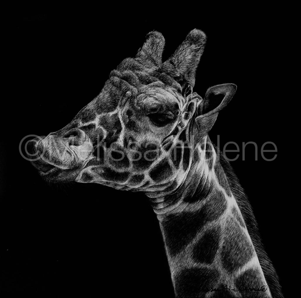 Giraffe 7 (wm)
