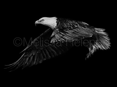 "Bald Eagle | Original | 9""x12"""