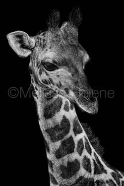 Giraffe 4 (wm)