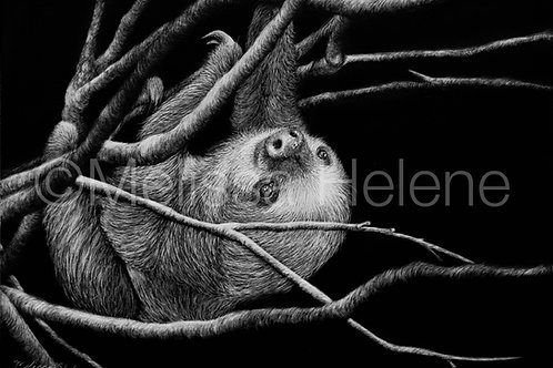 Sloth | Reproduction