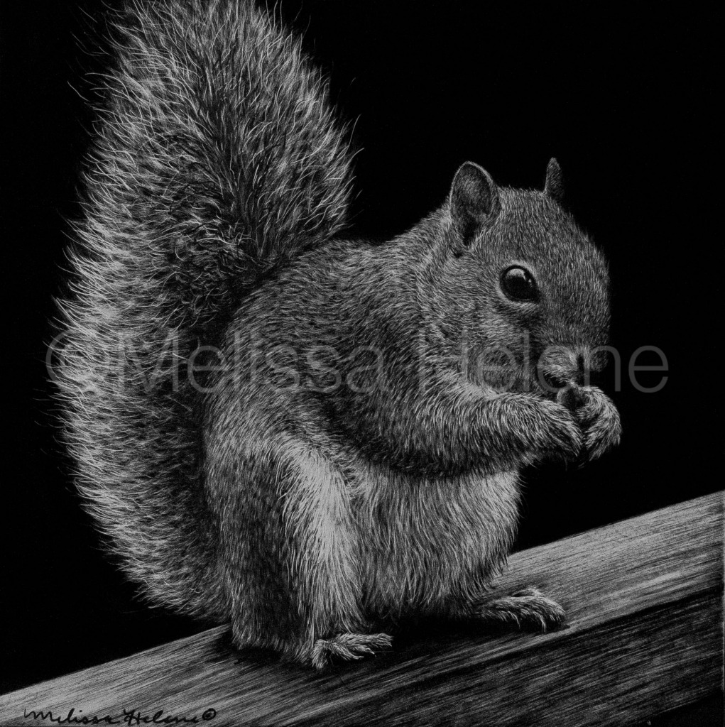 Squirrel 2 (wm)
