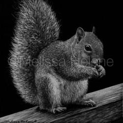 Squirrel 2 (wm)