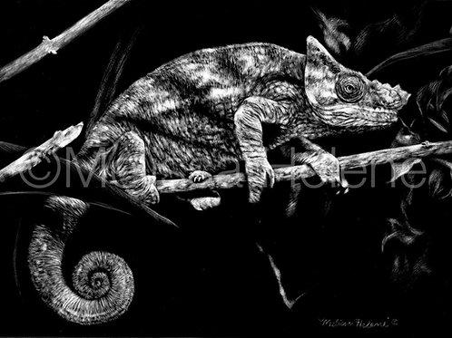 Chameleon | Reproduction