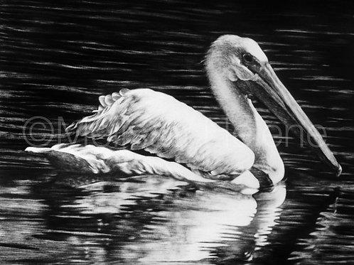 "White Pelican | Original | 8""x10"""
