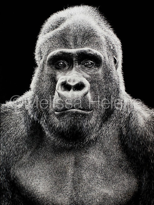 Gorilla | Reproduction