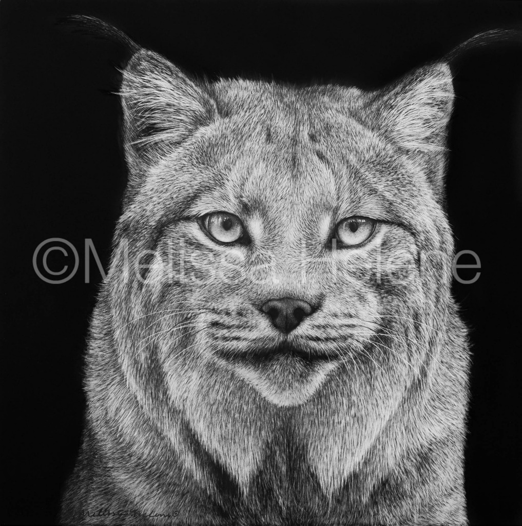 Lynx 3 (wm)