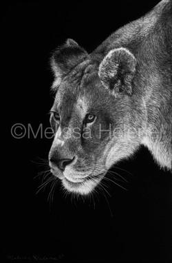 Lioness 5 (wm)