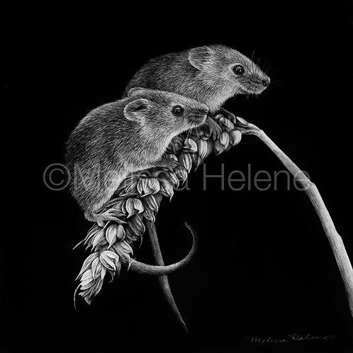"Harvest Mice | Original | 8""x8"""