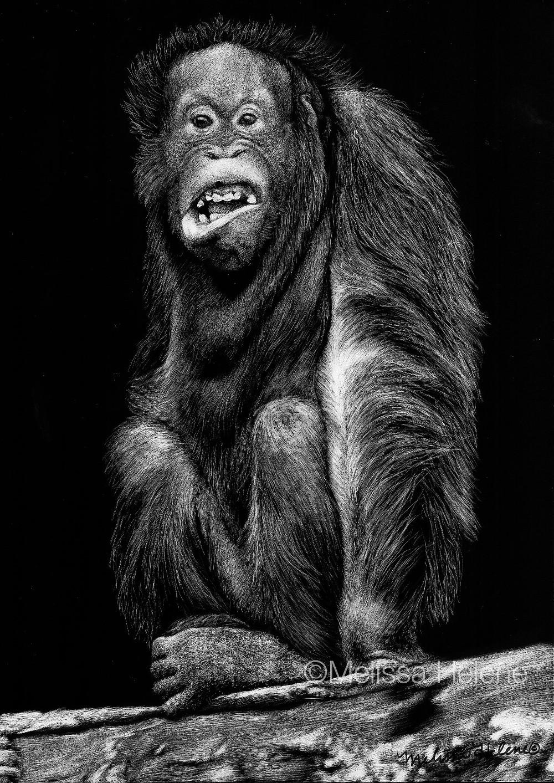 Orangutan (wm).jpg