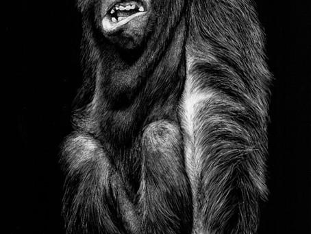 Orangutan   Endangered Species Series