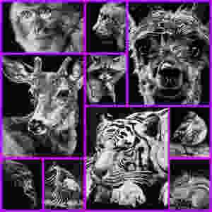 World Wildlife Day collage.jpg
