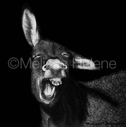 Donkey (wm)