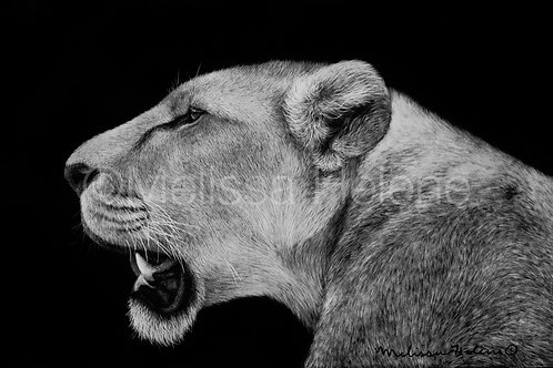 "African Lioness   Original   4""x6"""