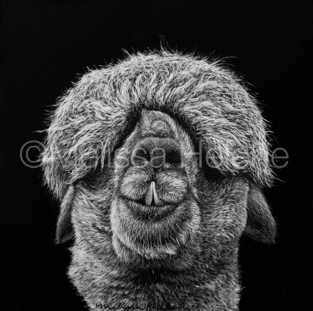 Alpaca 2 (wm)