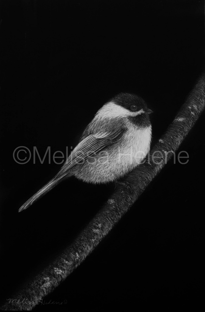 Bird - Chickadee 7 (wm)