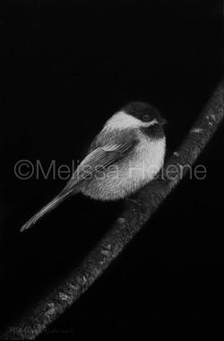 Bird - Chickadee 7 (wm)