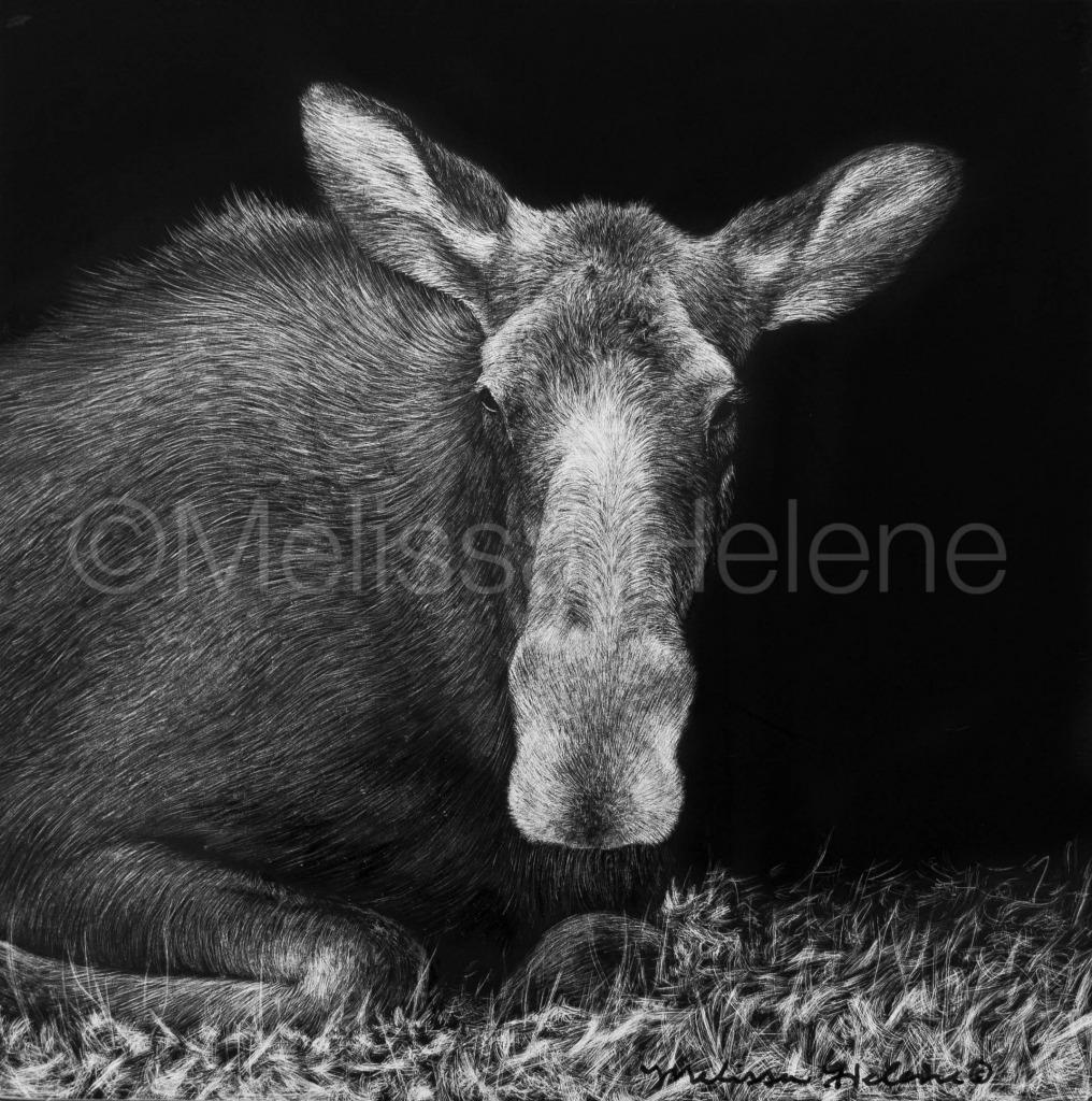 Moose 2 (wm)