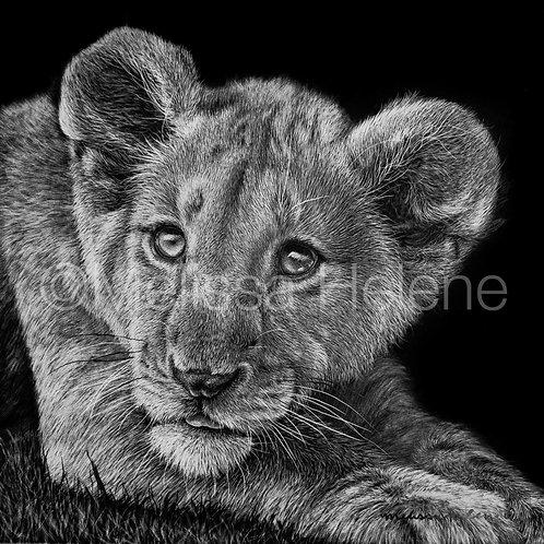 "African Lion Cub | Original | 5""x5"""