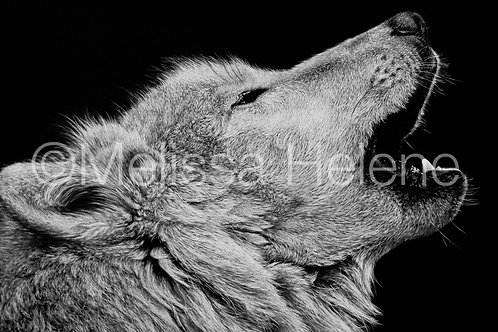 Howling Wolf | Reproduction