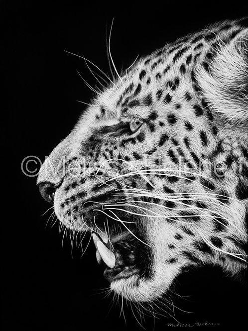 "Jaguar | Original | 7""x5"""