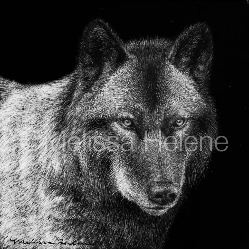 Wolf 14 (wm)