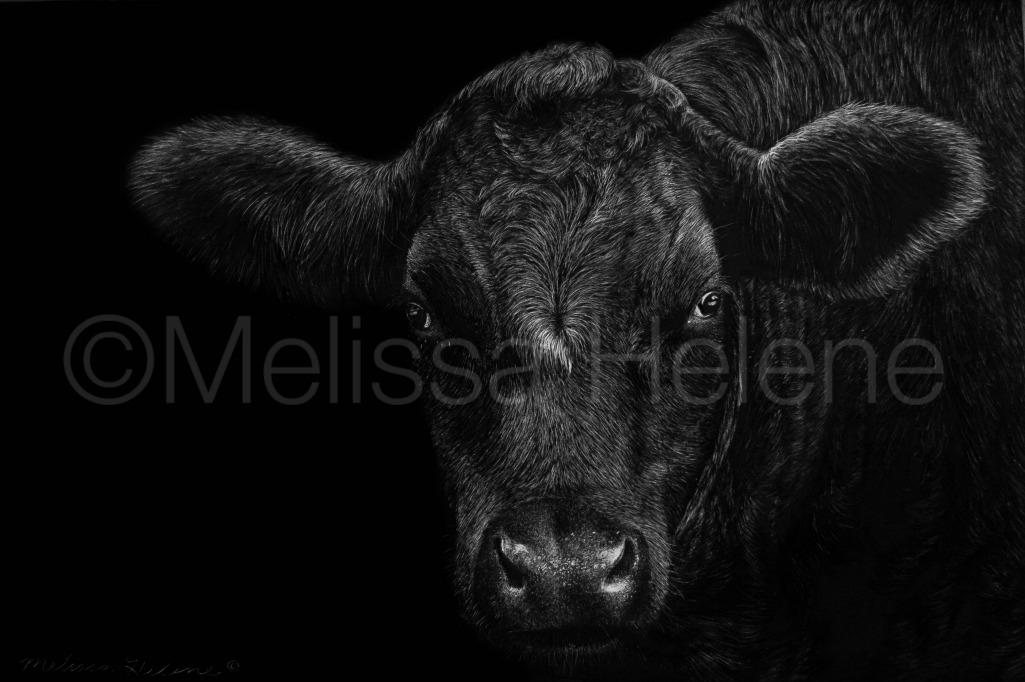 Cow 4 (wm)