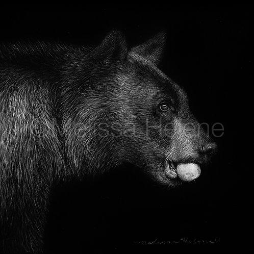 "Black Bear   Original   4""x4"""