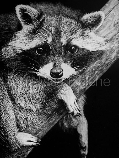 Raccoon | Reproduction