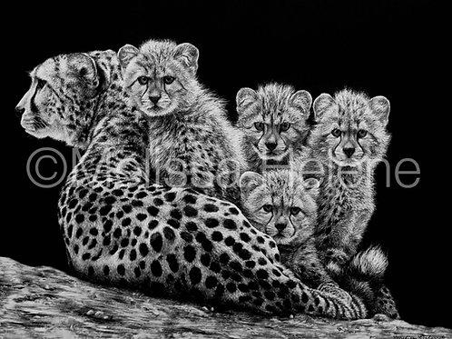 Cheetah Family | Reproduction