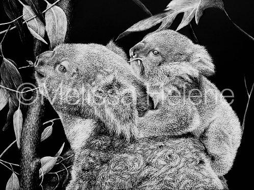 Koalas | Reproduction