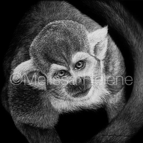 "Squirrel Monkey | Original | 8""x8"""