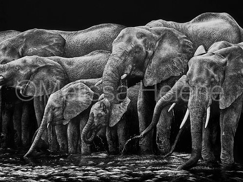 Watering Hole - Elephant | Reproduction