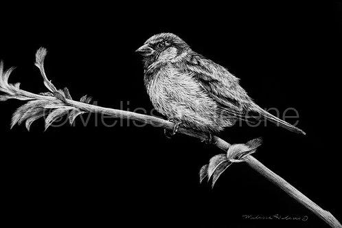 """Sparrow   Original   4""""x6"""""""