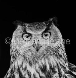 Bird - Owl, Eagle 2 (wm)
