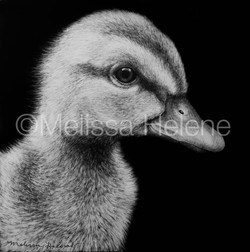 Bird - Mallard Duckling 2 (wm)