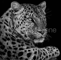 Jaguar 2 (wm)