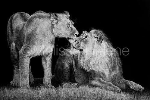 "African Lions | Original | 24""x36"""