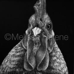 Bird - Chicken 3 (wm)