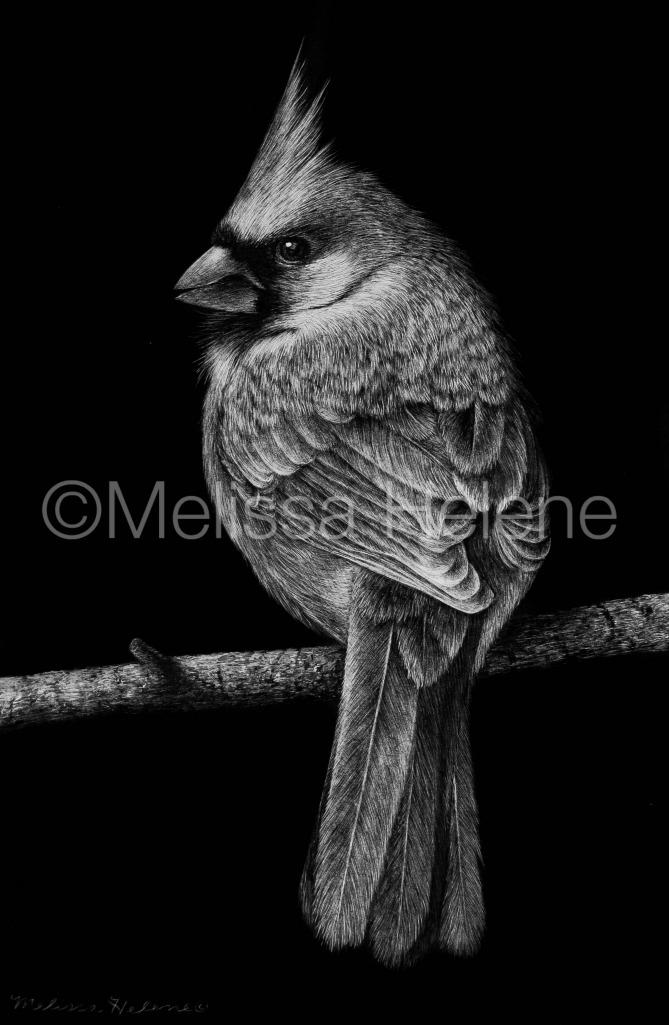 Bird - Cardinal 5 (wm)