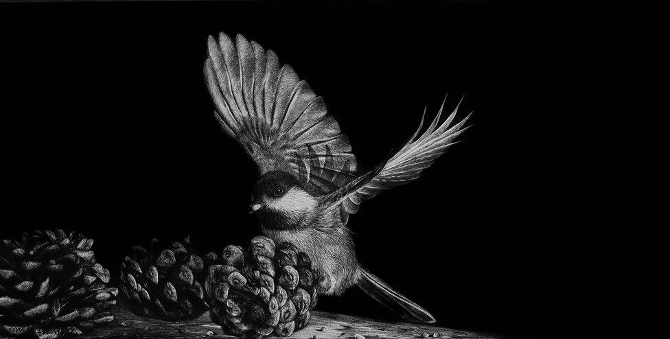 Scratchboard, chickadee, bird, scratchboard artwork, wildlife artwork, wildlife scratchboard artwork, animal art, wildlife artist