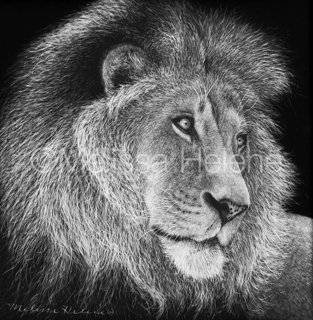 Lion 08 (wm)