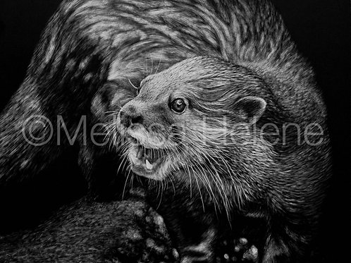 Otter | Reproduction