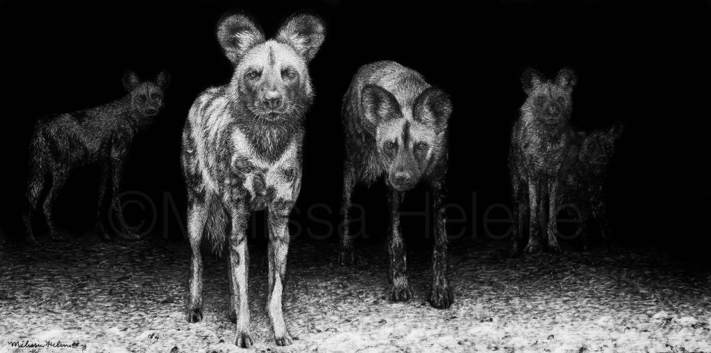African Wild Dogs (wm)